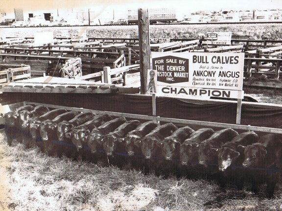 1935 - The Beginning | Leachman Cattle Company of Colorado